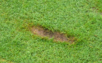 how to fix divots on the golf course - one stroke golf