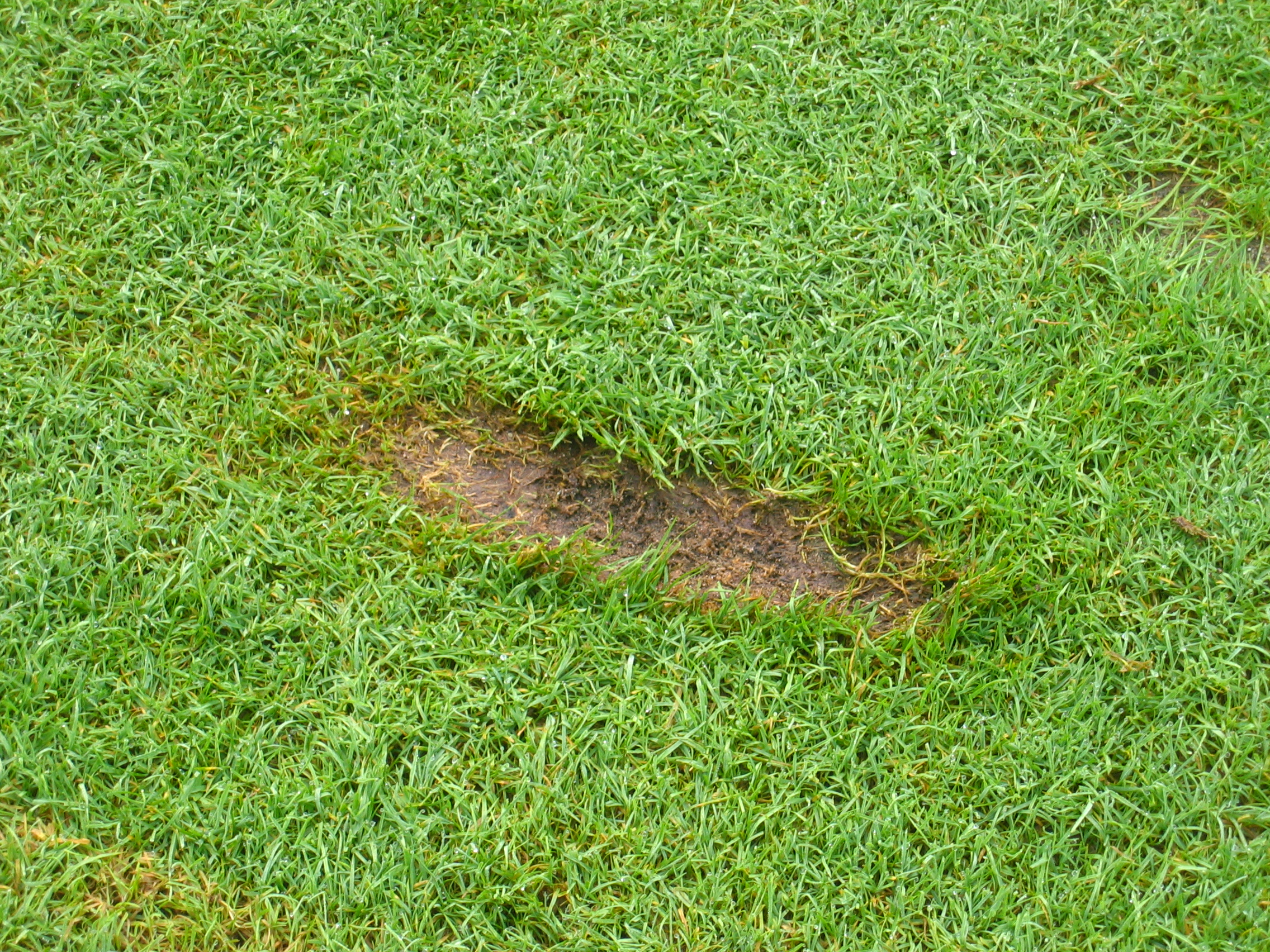 How To Fix A Divot On The Golf Course